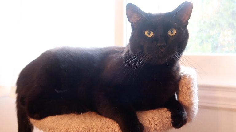 black cat on cat tower