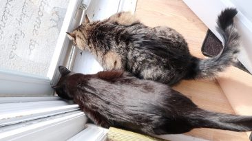 cats by the back door