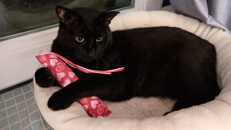 black cat and his toy