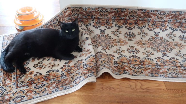 black cat on a messed up rug