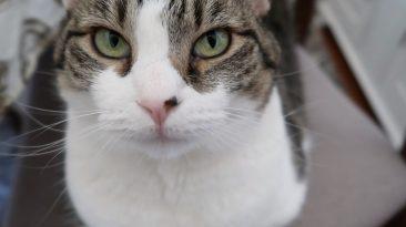 stella pretty cat