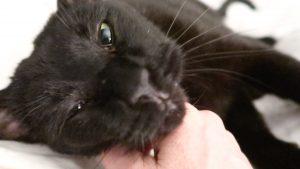 black cat getting pets