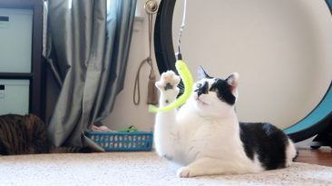 cat playing with worm wand toy