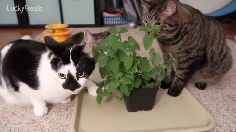 Cats Alone With Catnip