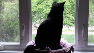 Lucky Ferals S3 E111 - Possum For Breakfast, Mail Time, Cat Masks - Cat Vlog