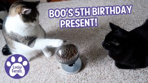 A Touch Activated Cat Food Dispenser For Boo's 5th Birthday!
