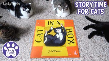 Cat In A Box book