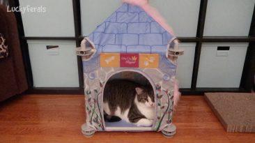 stellas cat castle