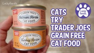 Trader Joe's Grain Free Cat Food Review - Salmon Recipe Turkey Recipe