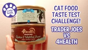 Cat Food Taste Test Challenge: Trader Joes vs 4Health