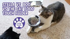 Do Cats Think? Stella vs Boo vs The Cat Food Touch Feeder