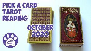 Pick A Card Tarot Reading October 2020 🔮 Medieval CAT Tarot 🎃 Guidance