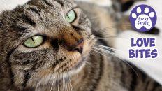catty whack