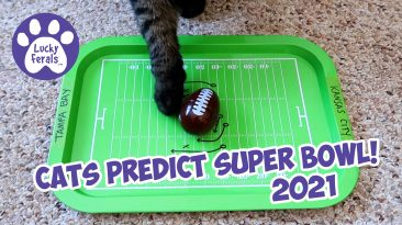 Cats Pick Super Bowl 2021