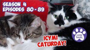 ICYMI Caturday S4 80-89