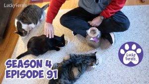 Crunchies From Grandpa, Cleaning Out A Cat Shelter, A Cat Donut * S4 E91