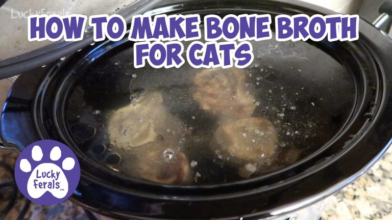 Bone Broth For Cats