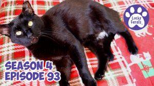 Lucky Ferals Season 4 Episode 93 Cat Family Vlog