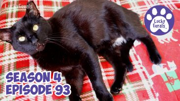 Lucky Ferals Season 4 Episode 93 Cat Family Vlog