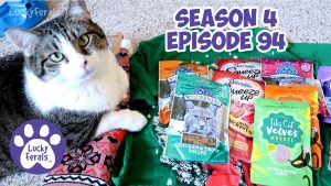 Performatrin Naturals Dry Cat Food, Mail Time * S4 E94 * Cat Vlog