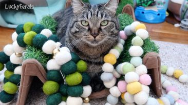 Pom Poms For Cats
