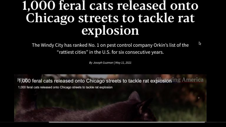 Chicago Feral Cats