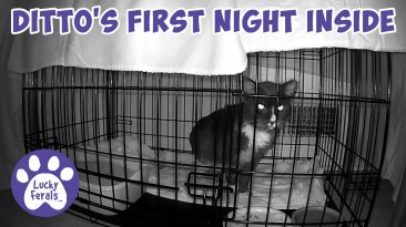 Feral Cat's First Night Inside
