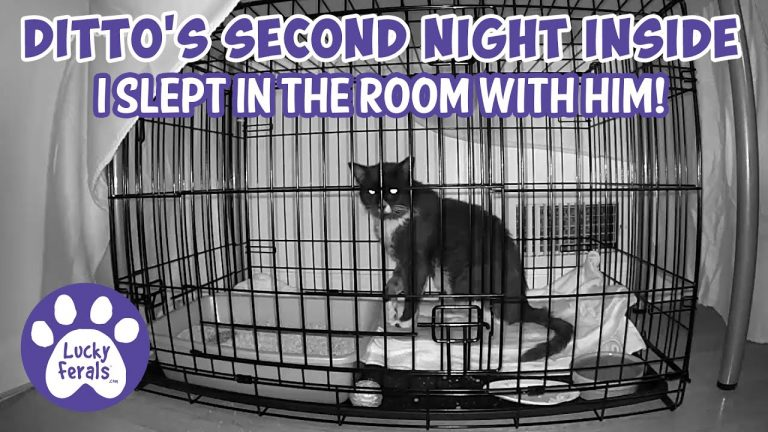 Feral cat's second night inside