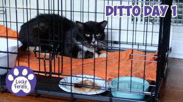feral cat recovery crate