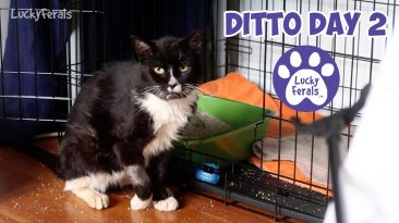 Ditto Day 2 Feral Cat Recovery