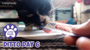 Ditto Day 6 - Feral Cat Recovery, More Progress For Ditto